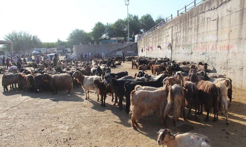 Diyarbakır'da kurban satış ve kesim yerleri belli oldu
